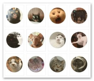 набор глупых кошек