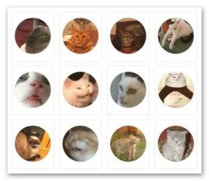 набор глупые кошки