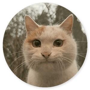 стикеры глупые кошки для телеграм