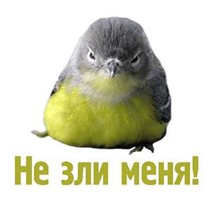 стикеры комические животные для Телеграм