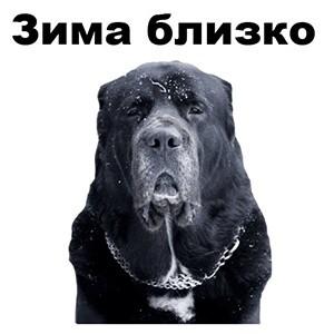 стикеры псы для телеграм