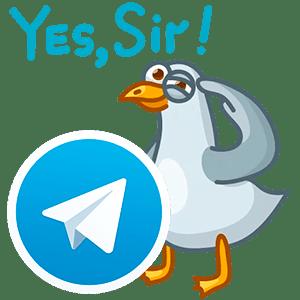 стикеры голуби для Telegram