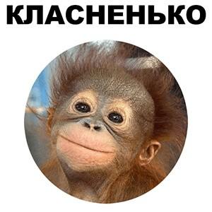 стикеры Животные для Телеграм